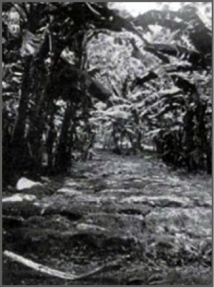 Route pavée de Rarotonga.